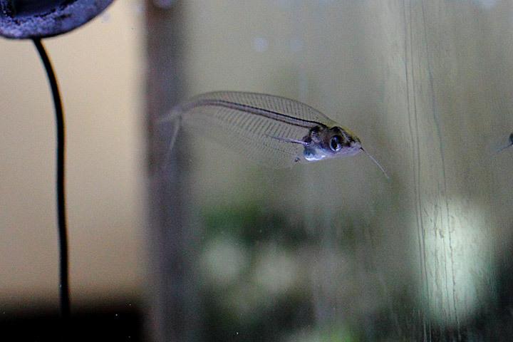 去っていった魚たち1.jpg