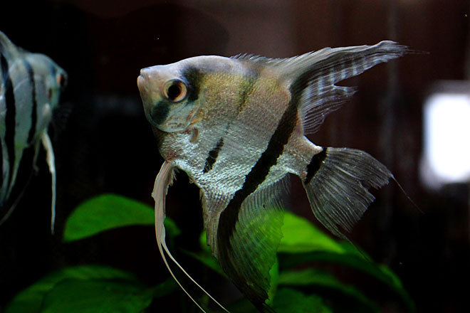 熱帯魚1-5.jpg