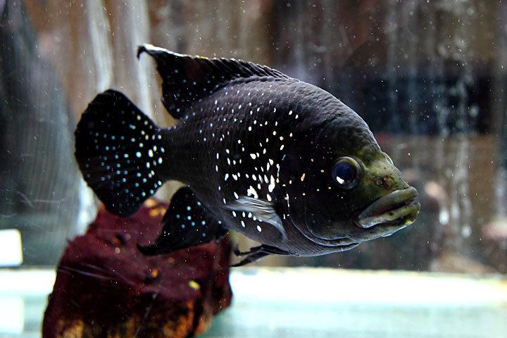 熱帯魚2014-06.jpg