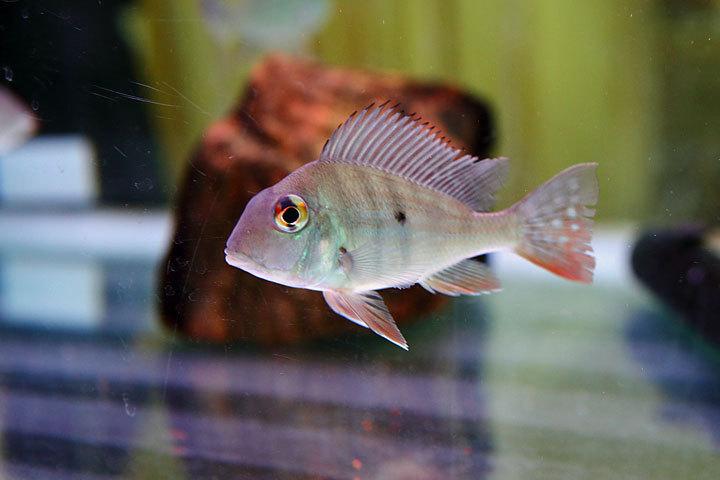 熱帯魚2017-5.jpg