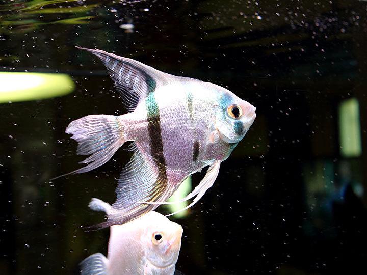 熱帯魚4.jpg
