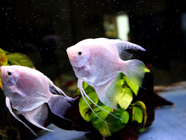 熱帯魚6.jpg