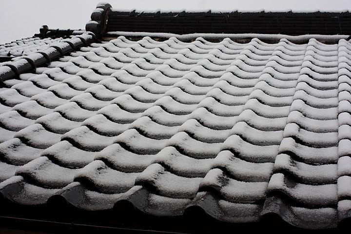 スタッドレスと寒椿-1.jpg