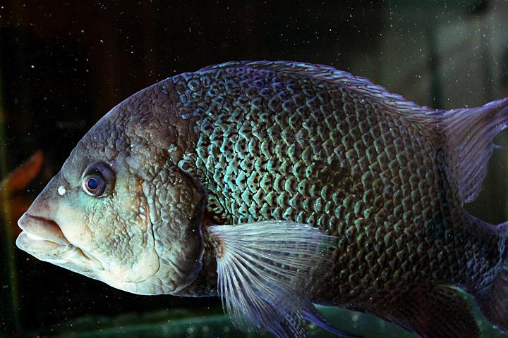 去っていった魚たち3.jpg