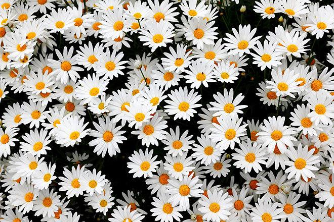 咲く05.jpg