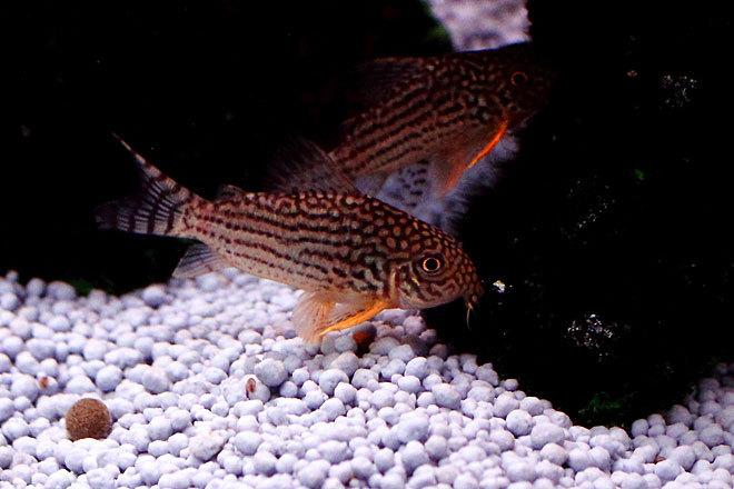 熱帯魚1-3.jpg