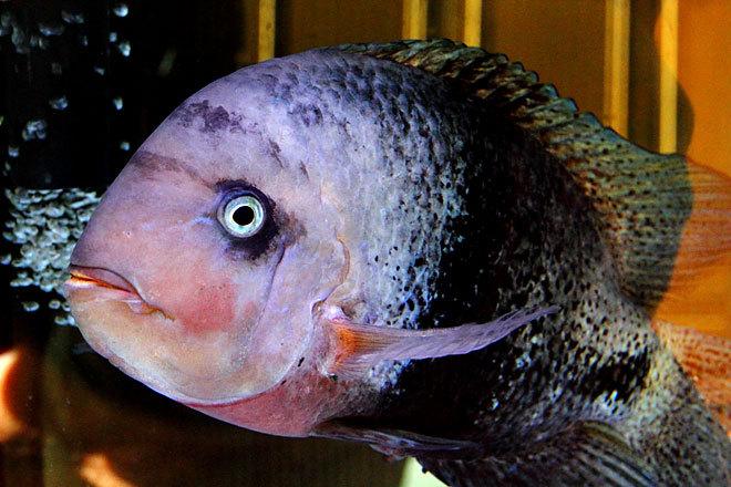 熱帯魚1-4.jpg