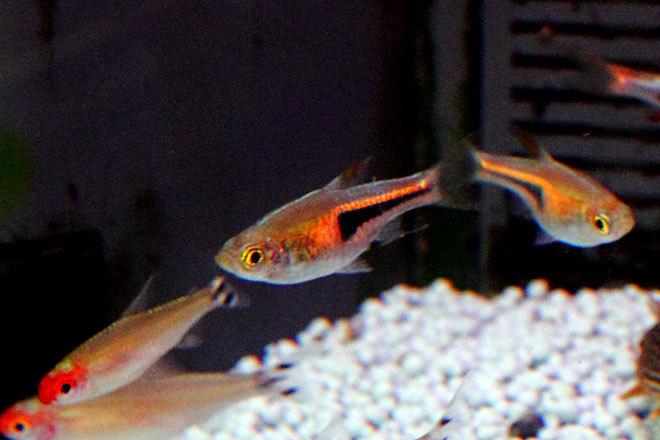 熱帯魚1-6.jpg
