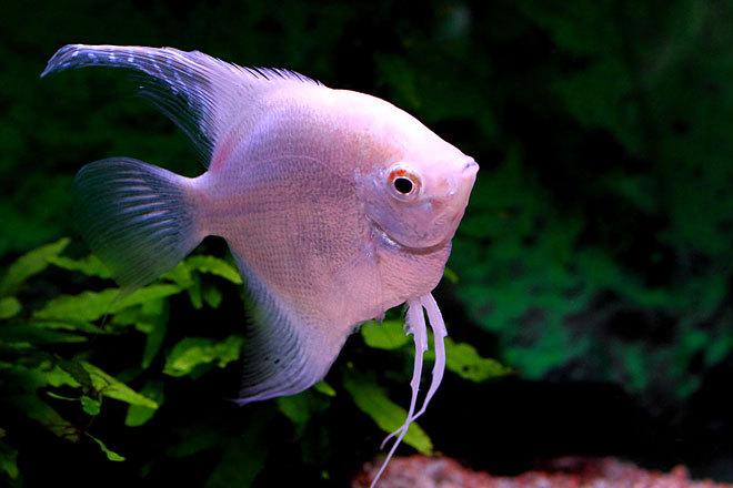 熱帯魚2-1.jpg