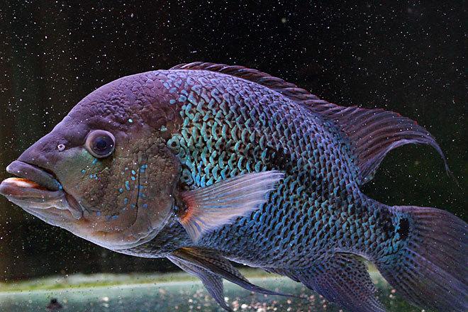 熱帯魚2-6.jpg