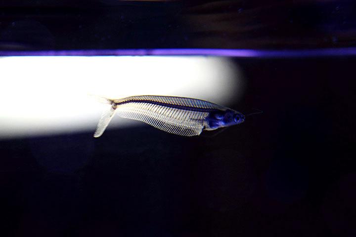 熱帯魚2014-02.jpg
