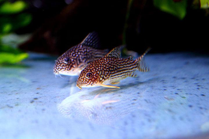 熱帯魚2014-03.jpg