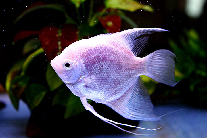 熱帯魚2014-04.jpg