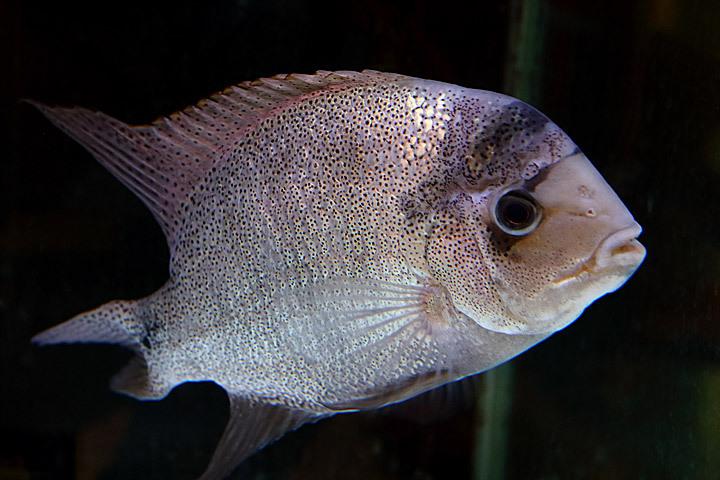 熱帯魚2015-07.jpg