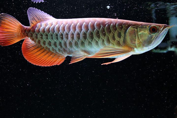 熱帯魚2017-1.jpg