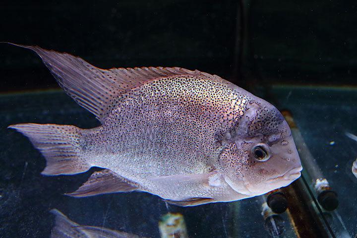 熱帯魚2017-6.jpg