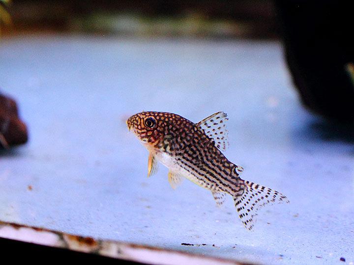 熱帯魚7.jpg