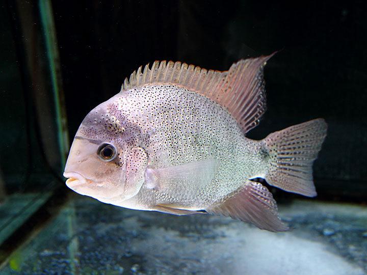 熱帯魚8.jpg
