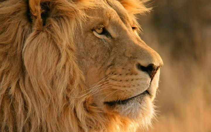 風に立つライオン.jpg