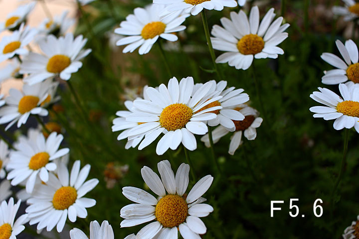 EF-S24-3-7.jpg